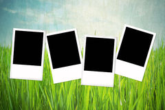 Group of blank photo frame Royalty Free Stock Image