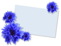 Group of blue flowers with message-card Royalty Free Stock Photography