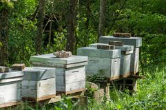 Blue wooden beehives in a green meadow at spring Stock Photography