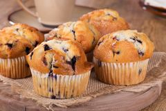Golden Brown Blueberry Muffins Royalty Free Stock Image