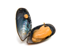 Group of boiled mussels in shells Stock Image