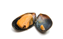 Group of boiled mussels in shells Stock Photo