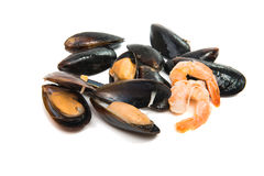Group of boiled mussels in shells Royalty Free Stock Image