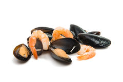 Group of boiled mussels in shells Stock Photos