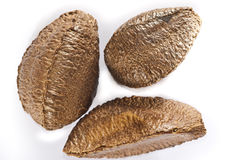Group of Brazilian nuts Stock Photo