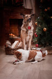 Group of breed dogs, company of dogs on holiday Royalty Free Stock Photography