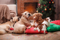 Group of breed dogs, company of dogs on holiday Stock Photos