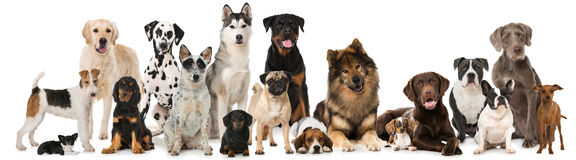 Group of breed dogs Royalty Free Stock Photos