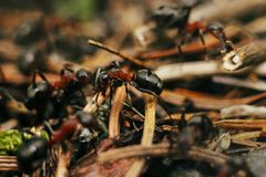 Group of brown ants working their nest in the woods in m. Ountains stock photo