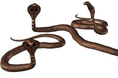 Group of brown cobra-snakes. Render. Group of brown Cobra snakes on white background Royalty Free Illustration