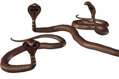 Group of brown cobra-snakes. Render. Group of brown Cobra snakes on white background royalty free illustration