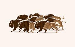 Group of buffalo running Stock Image