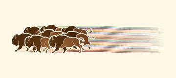 Running Buffalo Stock Illustrations 75 Running Buffalo Stock Illustrations
