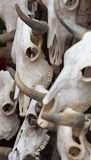 Group of bull skulls as a background Stock Images