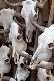 Group of bull skulls as a background Royalty Free Stock Photo