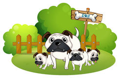 A group of bulldogs near the fence Royalty Free Stock Images