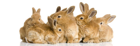 Group of bunnies. Scaredgroup of bunnies in front of a white background Royalty Free Stock Images