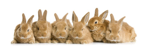 Group of bunnies. In front of a white background