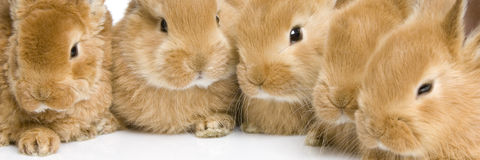 Group of bunnies. Close-up on a group of bunnies in front of a white background Stock Images
