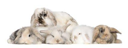 Group of bunnies Royalty Free Stock Photos