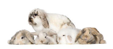Group of bunnies Royalty Free Stock Photo