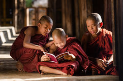 Group of Burmese young monks reading book in temple Stock Photography