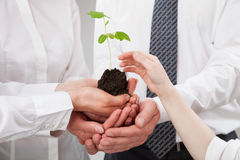 Group of business people holding a green sprout and child's hand. Reaching out to it - closeup shot Stock Photography