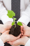Group of business people holding a green sprout. Closeup shot Stock Photography
