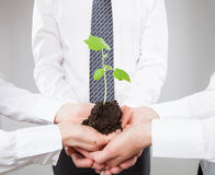 Group of business people holding a green sprout. Closeup shot Royalty Free Stock Image