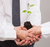 Group of business people holding a green sprout. Closeup shot Stock Photo