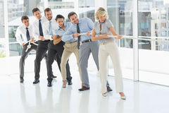 Group of business people pulling rope in office Royalty Free Stock Image