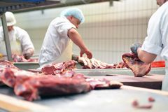Group of butchers works in a slaughterhouse and cuts freshly slaughtered meat (beef and pork) for sale and further processing as. Group of butchers works in a stock photography
