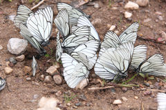 Group of butterflies. Royalty Free Stock Image