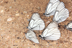 Group of butterflies. Royalty Free Stock Photos