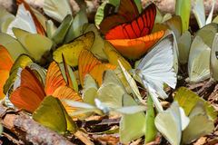 Group of butterflies. On ground Royalty Free Stock Photos