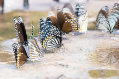 Group of butterflies Royalty Free Stock Image