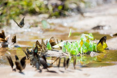 Group of butterflies Royalty Free Stock Photography