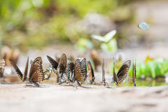 Group of butterflies Stock Images