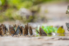 Group of butterflies Stock Photography