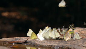 Group of butterflies in nature stock video
