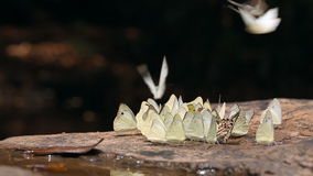 Group of butterflies in nature stock video footage