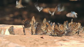 Group of butterflies in nature stock footage