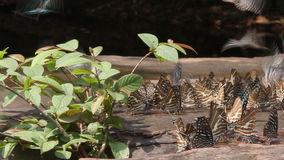 Group of butterflies in nature, slider shot stock footage
