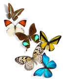 Group of butterflies Royalty Free Stock Photos