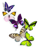 Group of butterflies. Group of a butterflies on white background Royalty Free Stock Photos