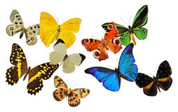 Group of butterfly Royalty Free Stock Photo