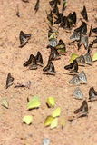 Group of  butterfly on the ground Royalty Free Stock Photos