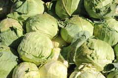 Group of cabbage Stock Photos