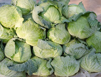 Group of Cabbages. In the floating market Stock Photography