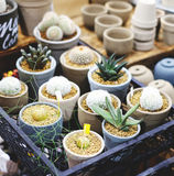 Group of cactus. Many cactus on pot for nature garden fair royalty free stock image